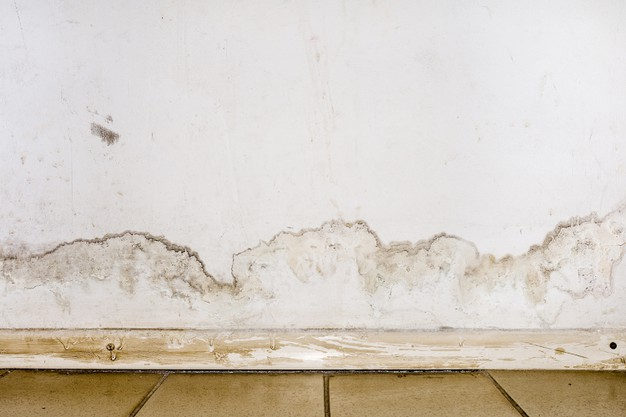 4 Steps to Handle Mold